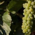 Un Chardonnay de La Mancha toledana entre los 10 mejores del mundo